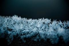 cold (Lars Kehrel) Tags: blue schnee winter white snow cold macro ice k landscape cool crystals pentax crystal sweden d schweden north sigma lars 200 polar blau makro 1770 kalt eis landschaft kristall umea weis kristalle 200d k200 monochron k200d kehrel larskehrel