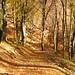 Autumn in the woods near Olanesti, in the Romanian region of Oltenia