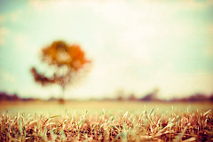 In My Dreams. (CarolynsHope) Tags: blue autumn blur tree texture field vintage carolyn blurry nikon peace dof dream calming peaceful atmosphere calm dreamy pareerica carolynshope