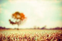 In My Dreams. (CarolynsHope) Tags: blue autumn blur tree texture field vintage carolyn blurry nikon peace dof dream calming peaceful atmosphere calm dreamy pareerica carolynshope