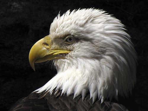 Eagle Pass Used Car Dealerships