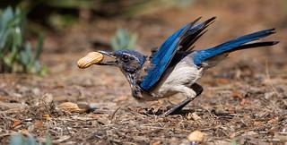 The Perfect Peanut