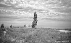 Dune Grass, St. Joseph (mswan777) Tags: beach dune sand grass wind weather pier lighthouse wares shore coast tree lake michigan seascape monochrome black white landscape nikon d5100 sigma 1020mm nature outdoor scenic sky cloud