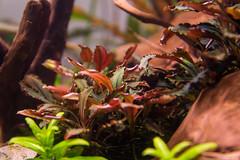 _MG_9824 (dearwalrus) Tags: eheim vivaline 330 canon 70d sigma 1750 acuario aquarium