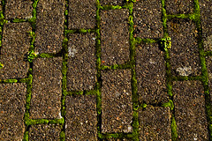 Can you get out of this maze? (Sina Farhat) Tags: autumn red plants green lines photoshop canon raw pattern colours stones mark details sigma ground photowalk maze 28 hst 30d vxter rd frger cs4 grn stenar detaljer adobecameraraw mnster labyrint 2470 ensam linjer lonesame fotopromenad