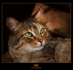 0258 Cat (QuimG) Tags: pets cat geotagged spain bravo europe favorites olympus textures gato harmony gat valència paísvalencià abigfave specialtouch flickraward citrit heartawards theunforgettablepictures diamondstars quimg betterthangood atravésdetumirada novaphoto spiritofphotography photoshopcreativo thedavincitouch grouptripod doubledragonawards lapetitegalerie worldsartgallery quimgranell joaquimgranell reservaespecial worldmesartmasters jotbesgroup thegoldenpowerclub finestimages mesarthonorablemembersgroup richardsfloraandfauna justexcellentmacros naturesqualitypictures naturesbestshot zodiacawards mostperfectshot specialshotswelltaken ☼ilfilodarianna gettyimagesspainq1