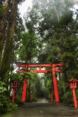 The Rainy Forest in Hakone (Stuck in Customs) Tags: world road park travel red mist color japan digital forest garden botanical photography blog high nikon october gate shrine asia dynamic stuck gates district national rainy wetlands remote imaging spiritual prefecture range kanagawa hakone 2009 hdr jinja trey travelblog customs  kokuritsu hakonemachi  ken ratcliff kanagawaken gongen  honsh fujihakoneizu  stuckincustoms  d3x kantchih shisseikaen  ashigarashimogun   ashigarashimo