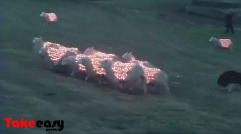 led羊 三星病毒视频