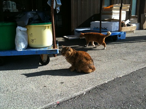 Today's Cat@20091228