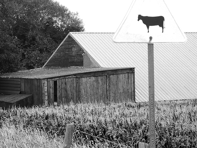 P1040565_cow_on_roof