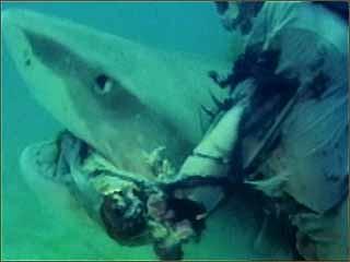 zombie_shark2