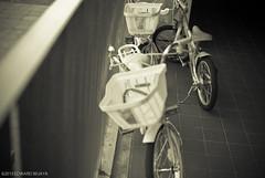 My Memory, Their Bicycles (camerafool) Tags: childhood bicycle japan 35mm tokyo nikon memory odaiba d3000