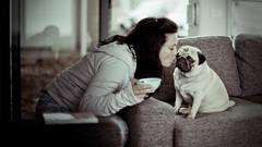 No smooches for you. (jæms) Tags: dog pet love girl miguel kiss pug elli oops p 1773★ whatis1337 dooooooogie