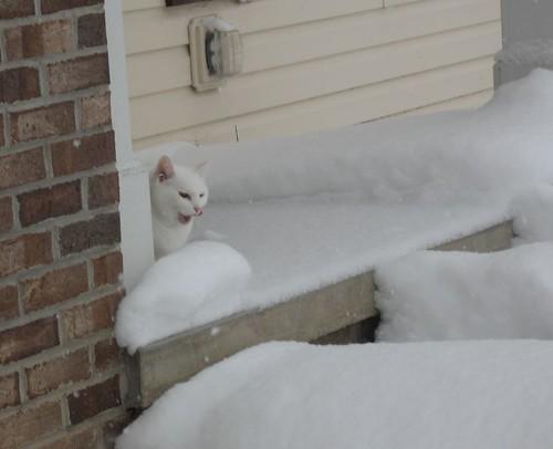 snowballsnow