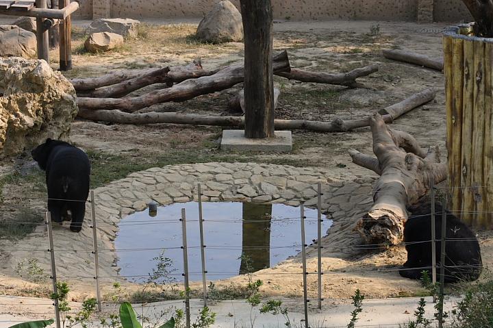 2010壽山動物園0018