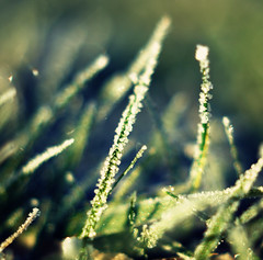 An even more frosty morning! (~aspidistra~) Tags: grass 50mm crossprocessed nikon coffeeshop frosty explore 18 pse brrrrrr actions d90 8365 hnff