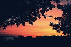 (- M7D . S h R a T y) Tags: sky nature sunrise random calm wordsbyme betweenhouses allrightsreserved siliuliet 5