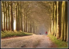 Black dog (glidblue) Tags: trees dog chien castle alberi walking arboles belgium path arbres lane 1001nights chteau chemin alle wallonie aplusphoto rgiondenamur glidblue leuropepittoresque