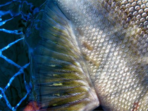 Jay Nicholas Sea Lice 2