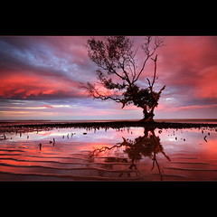Low tide (Garry - www.visionandimagination.com) Tags: blue sunset red tree water clouds photography mud dusk australia brisbane mangrove shore qld ripples artfineart flickrdiamond wwwvisionandimaginationcom
