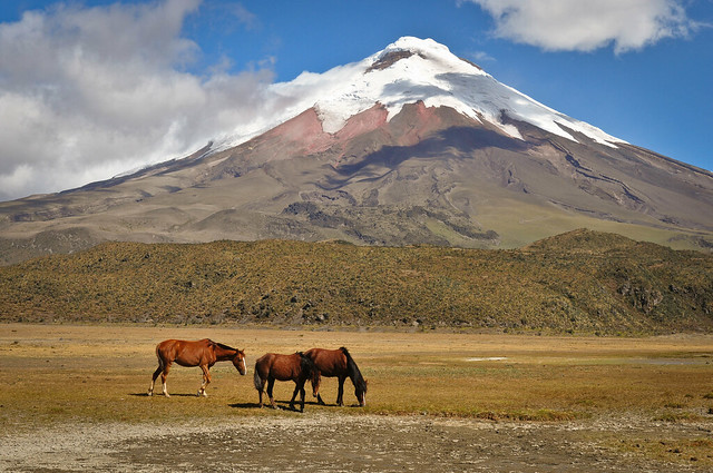horses and the cotopaxi  DSC_7765jpg by ronnyfaessler