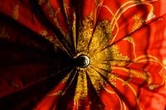 bitzi took his umbrella and left  (ion-bogdan dumitrescu) Tags: flowers red flower floral yellow umbrella design mg1820 bitzi ibdp ibdpro wwwibdpro ionbogdandumitrescuphotography