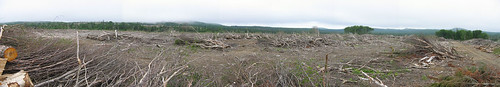 "Clearcut of a hardwood ridge stand on ""Irving"" land in NB by you."
