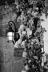 Grape juice store (ciscoflickr) Tags: blackandwhite bw lamp monochrome flask tuscany toscana uva grape lanterna biancoenero flasks monocromatico fisco fiaschi nikkor70200mmf28g