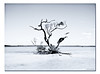 11,500 km2 of Mangroves ([ Kane ]) Tags: ocean longexposure sea sky tree beach water clouds boat sand roots australia deadtree mangrove qld queensland kane nd400 gledhill 50d kanegledhill kanegledhillphotography