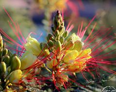 The Colors of Nature II (Ammar Al-Fouzan) Tags: flowers colors elgouna ammaralfouzan artofimages canon5dmarkii canonef50mmf12lusmlens bestcapturesaoi