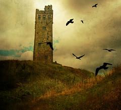 The Tower (vesna1962) Tags: england seagulls west tower castle birds scenery yorkshire textures sincity huddersfield ghostbones realmagic memoriesbook awardtree artistictreasurechest miasbest memoriesbook5 flickrvault magicunicornverybest selectbestfavorites magicunicornmasterpiece specialtouchfebruary