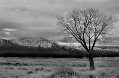 Black Mountain Peak (Eastern Sierra) Tags: winter sky bw mountain snow storm monochrome clouds landscape sigma olympus monotone mtwhitney zuiko evolt easternsierra owensriver olympusevolt e520 olympuse520
