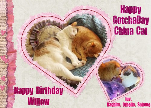 Happy Birthday Willow, Happy Gotcha Day China Cat!