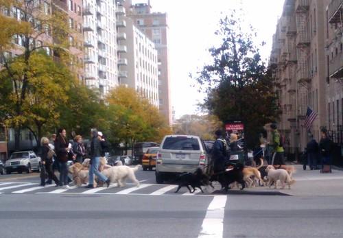 dog-walking-brigade