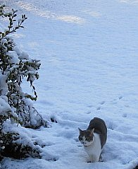 miss kitty in the snow
