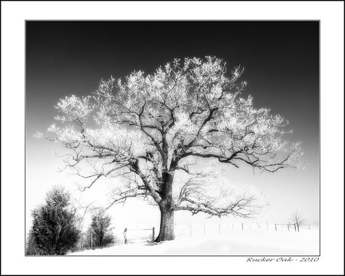 Rucker Oak IR (by Silver Image)