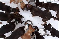 Michael Tetzner's - Sled Dogs - Empty  Bowles