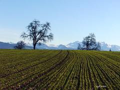 Wädenswilerberg CH (doro 51) Tags: green natur spuren grün landschaften linien updatecollection