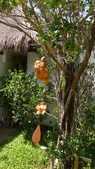Koh Samui Mimosa Resort-Exterior コサムイ ミモザリゾート7