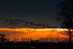birds fly to the sunset light (drbob97) Tags: trees light sunset orange sun tree beautiful birds dark fly special stunning blueribbonwinner thegalaxy tmba mywinners platinumphoto theunforgettablepictures platinumheartaward mygearandmepremium