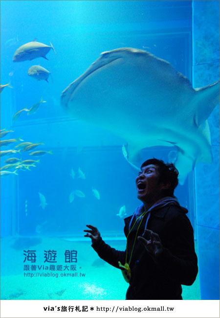 【via關西冬遊記】世界最大極的水族館~大阪海遊館31