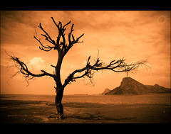 A dead tree and water found on Mars! (Yug_and_her) Tags: travel sky india lake tree water clouds nikon warm mud branches dry ground places hills shore tamilnadu lonetree pollachi d90 distantlands
