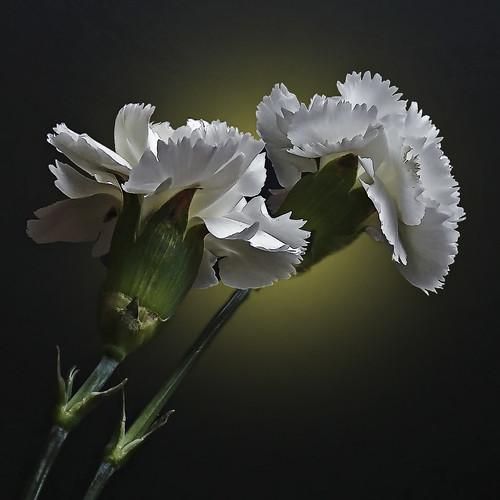 white flower_0323