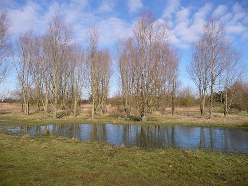 New Pond, Fairlop Plain