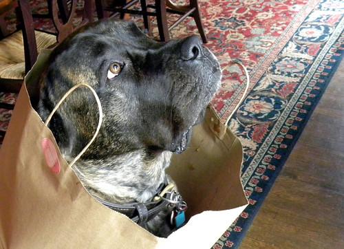 In the Bag I