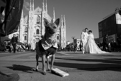 (44) (stuck in the middle with you) (Donato Buccella / sibemolle) Tags: street wedding blackandwhite bw italy dog milan milano streetphotography duomo chinawedding canon400d sibemolle fotografiastradale
