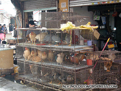 Chicken and rabbits waiting to be slaughtered