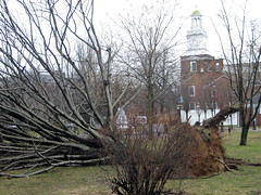 Day after the storm of 3/13/10 (Oquendo) Tags: trees snow newyork storm arboles wind nieve longisland tormenta freeport 2010