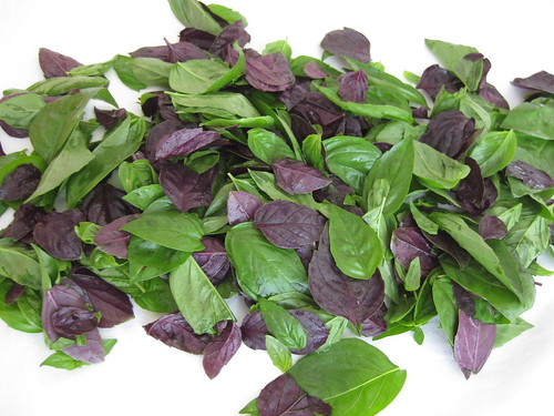 Green and Purple Basil Leaves
