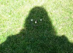 Grassy Stare